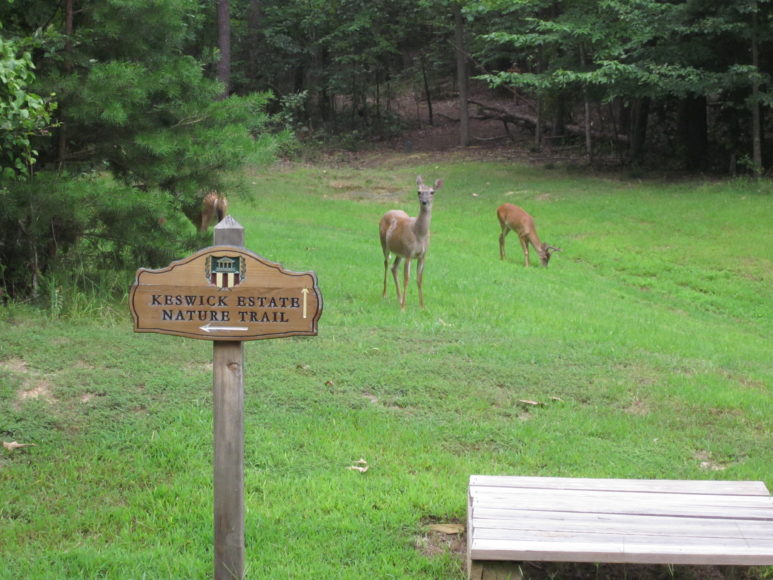 Nature Trail - Deer